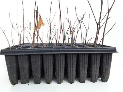 Forestal los molinos viveros de plantas en asturias for Viveros en asturias